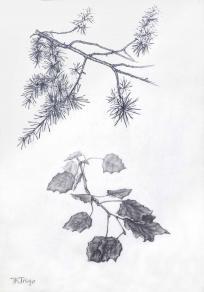 Detalles de ramas