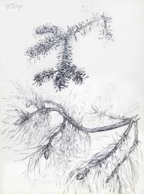 Détails de branches